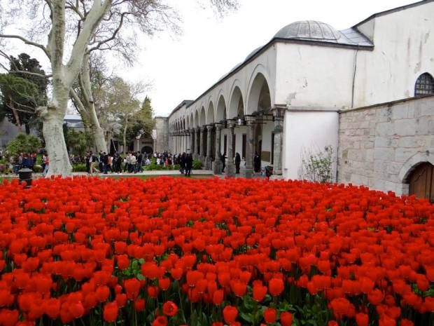 Tulips in full bloom at the Topkapi Palace